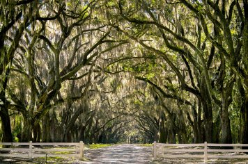 wormsloe_plantation_2_by_rctfan2-d5iz49x